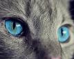 Omgangsregelingen met huisdieren tijdens een scheiding